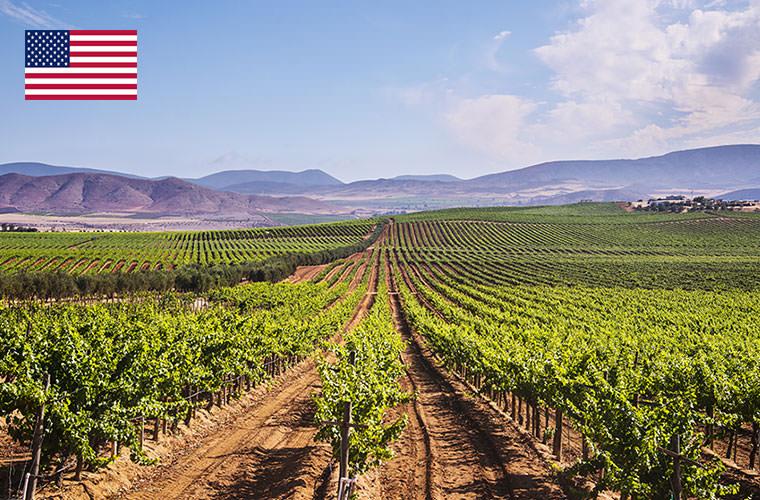 アメリカ その他レアワイン